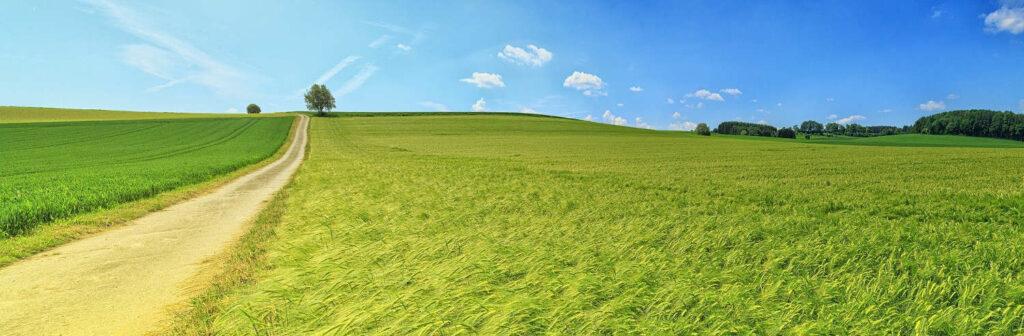 grüne Landschaft mit Getreidefeldern